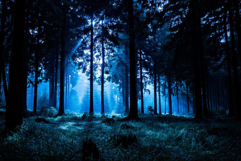 Forest Original Artificial Christmas Trees